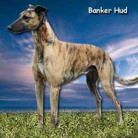 Banker Hud