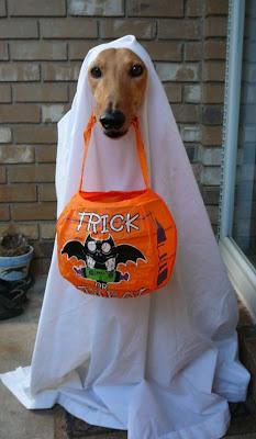 Halloween greyhounds